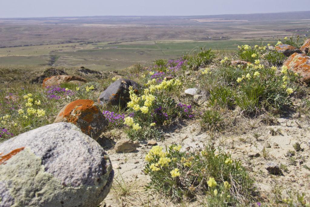Saskatchewan Grasslands National Park | My Wandering Voyage travel blog