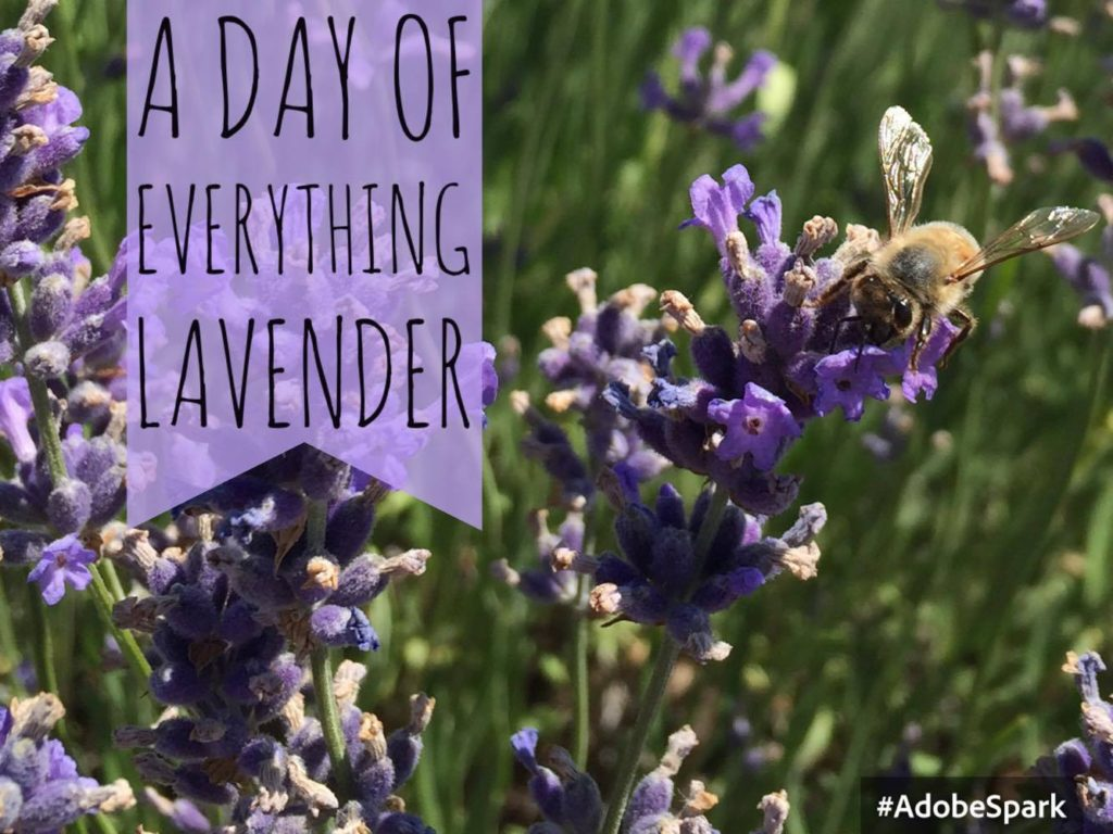 A day of everything lavender – NEOB Lavender Festival in Niagara-on-the-Lake