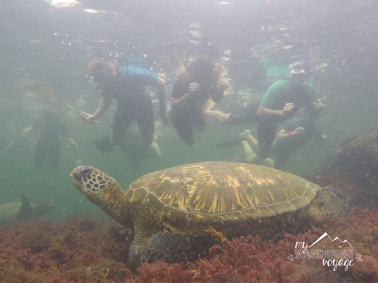 Snorkelling in the Galapagos with Pahoehoe tours