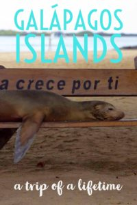 Fall in love with the Galapagos Islands. Go snorkelling, explore the landscape, and see wildlife like sea lions, tortoises, marine iguanas and more. | My Wandering Voyage #travel blog #Galapagos #Ecuador