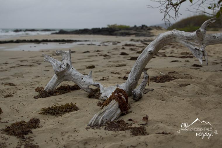 Isabela Island Galapagos | My Wandering Voyage travel blog