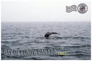 Wandering Postcard: Bay of Fundy, Canada | My Wandering Voyage travel blog