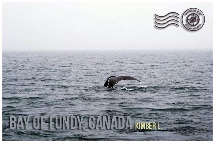 Wandering Postcard: Bay of Fundy, Canada   My Wandering Voyage travel blog