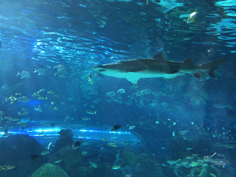 Ripley's Aquarium of Canada - Top ten things to do in Toronto for first timers   My Wandering Voyage travel blog