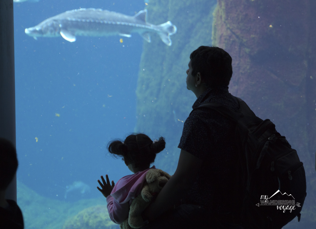St. Lawrence River exhibit at the Biodome in Montreal - 14 essential experiences for a weekend in Montreal, Quebec, Canada | My Wandering Voyage travel blog