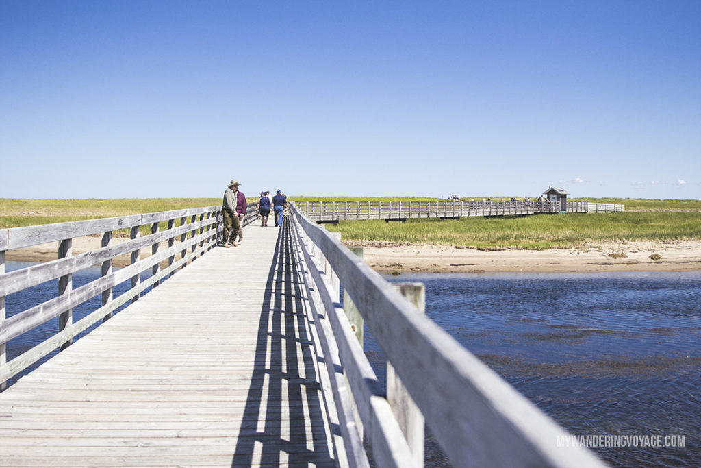 Discover Kouchibouguac National Park - 10 treasures to discover in New Brunswick, Canada. From rugged coasts to sandy beaches to French heritage and fresh seafood, New Brunswick has it all | My Wandering Voyage