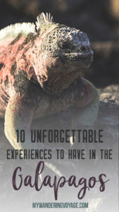 10 unforgettable experiences to have in the Galapagos – Galapagos is everything a traveller dreams of and more. Here are 10 unforgettable experiences to have in this South American travel destination. | My Wandering Voyage travel blog
