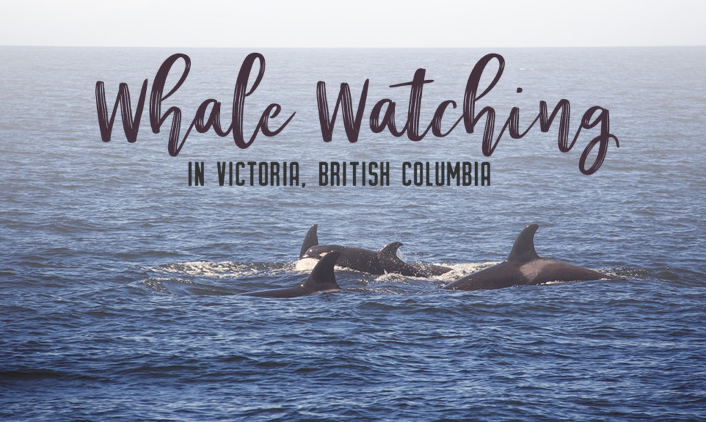 Whale watching in Victoria, BC