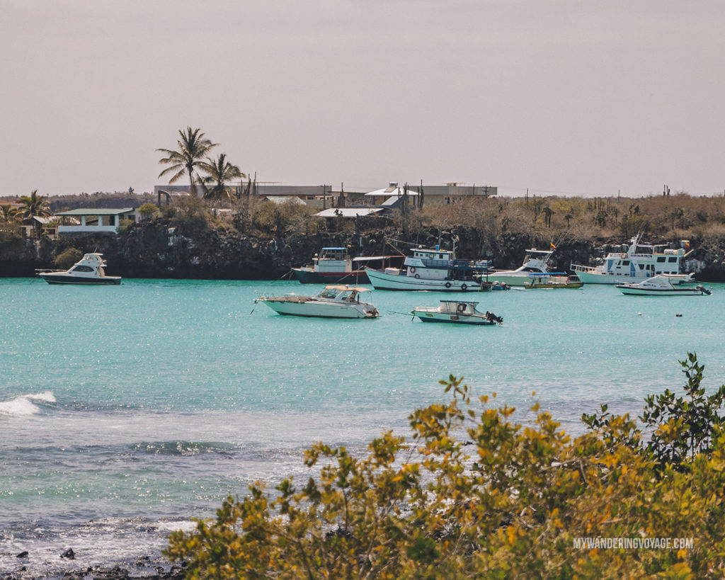 Puerto Ayora | A trip to the Galapagos Islands will be unforgettable, and with these Galapagos Islands travel tips, you'll be sure to have a worry-free trip from start to finish. | My Wandering Voyage travel blog #galapagos #galapagosislands #travel #traveltips #Ecuador #southamerica