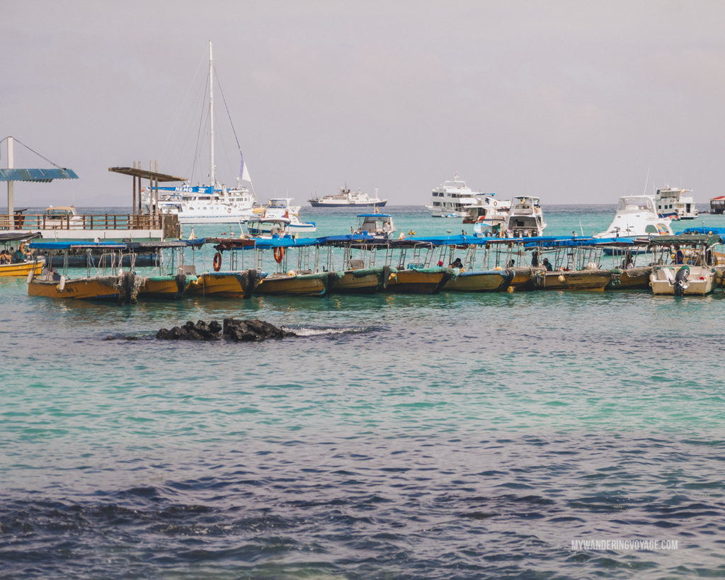 Water taxis | A trip to the Galapagos Islands will be unforgettable, and with these Galapagos Islands travel tips, you'll be sure to have a worry-free trip from start to finish. | My Wandering Voyage travel blog #galapagos #galapagosislands #travel #traveltips #Ecuador #southamerica