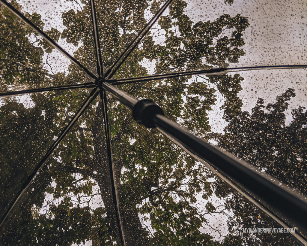 Looking up through a clear umbrella in the rain | With the powerful device in your pocket you can take incredible photos of your travels. Here is the ultimate guide to smartphone travel photography. | My Wandering Voyage travel blog #travel #photography #tips #travelphotography #smartphonephotography