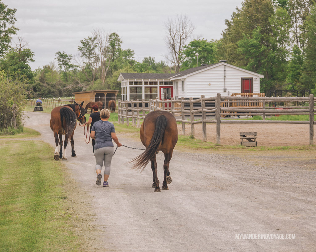 Willaway Farms, Almonte, Ontario