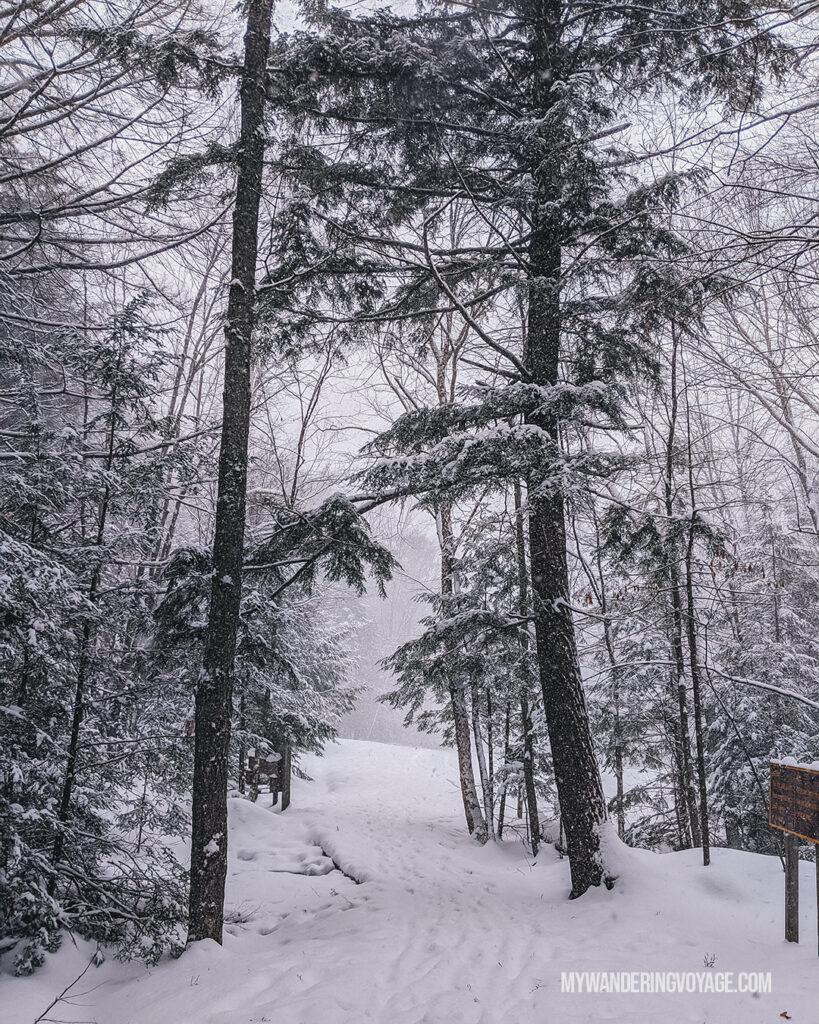 Snow forest path muskoka