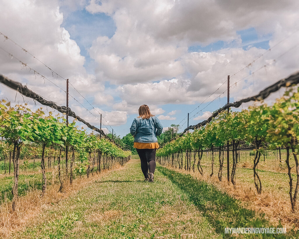 Walking through the self guided tour of the Hounds of Erie Winery | Discover Ontario's Garden: Relaxing things to do in Norfolk County | My Wandering Voyage travel blog
