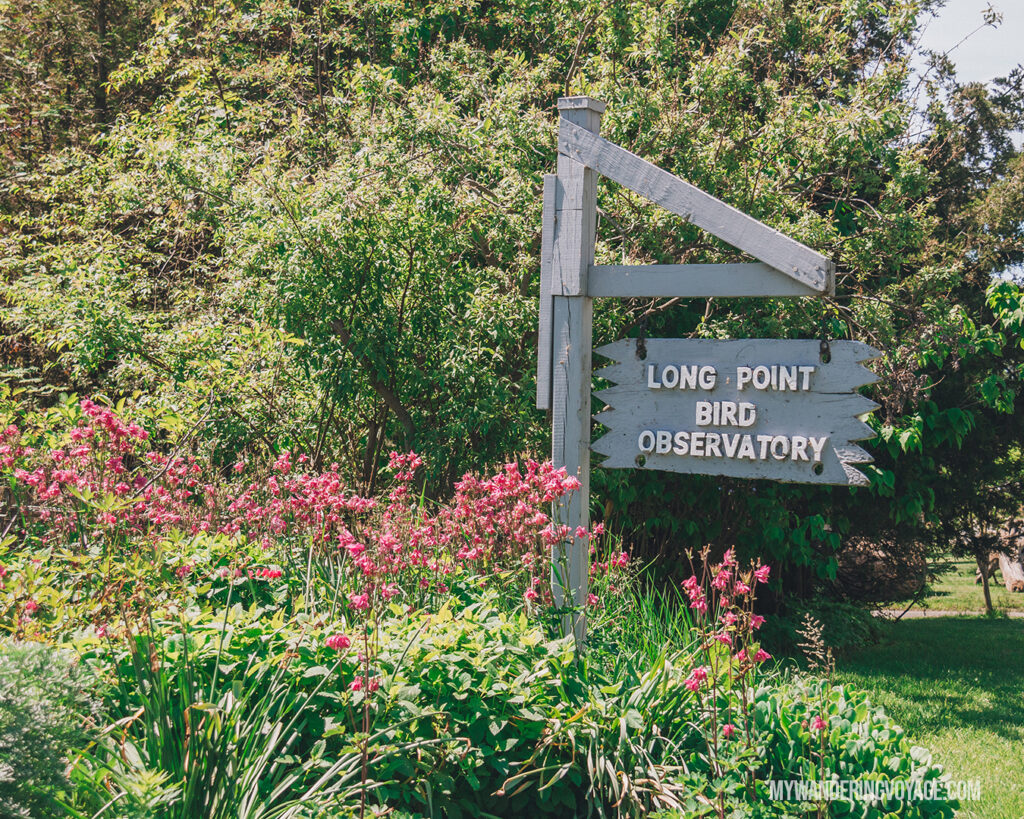 Long Point Bird Observatory | Discover Ontario's Garden: Relaxing things to do in Norfolk County | My Wandering Voyage travel blog