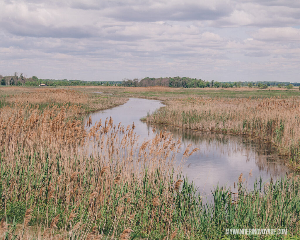Big Creek Wildlife Management Area | Discover Ontario's Garden: Relaxing things to do in Norfolk County | My Wandering Voyage travel blog