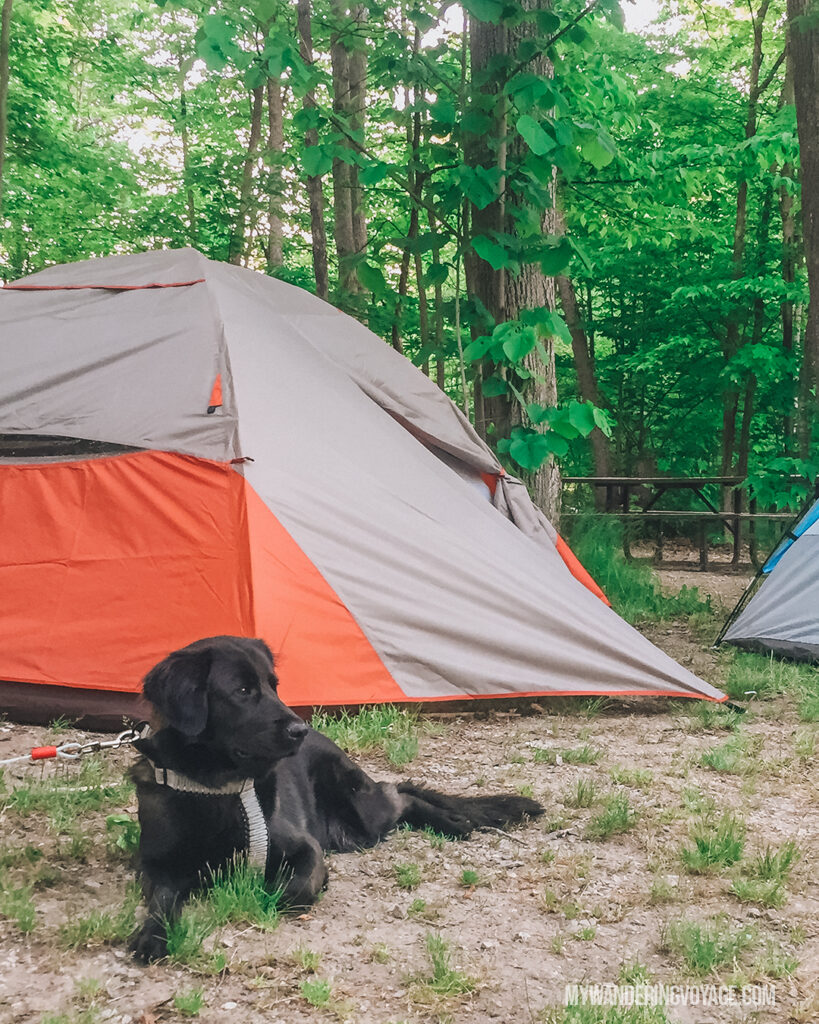 Camping with a dog | Beginners guide to camping + camping essentials | My Wandering Voyage travel blog