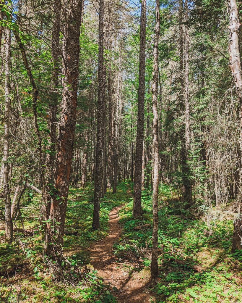 Hiking in Pukaskwa National Park | Everything you need to know about Pukaskwa National Park [+ hiking guide] | My Wandering Voyage travel blog #Pukaskwa #NationalPark #Canada