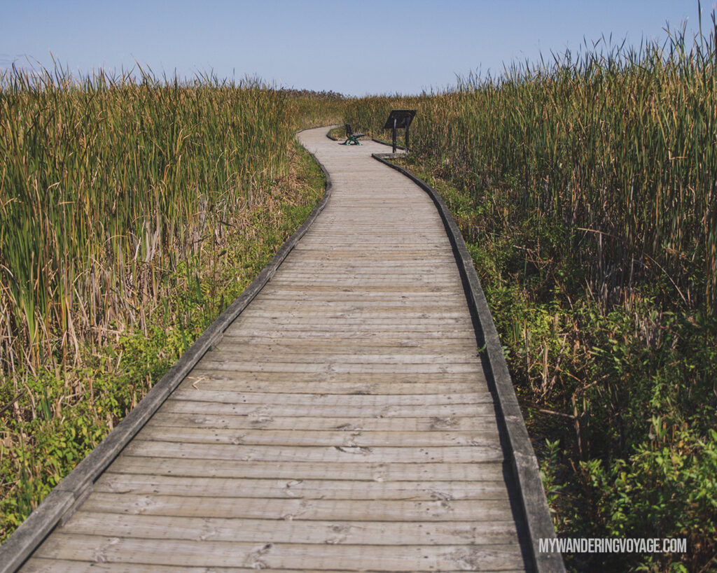 Marsh Boardwalk Trail at Point Pelee National Park | The Ultimate Guide to National Parks in Ontario | My Wandering Voyage travel blog #travel #Ontario #Canada #BrucePeninsula #ThousandIslands #camping