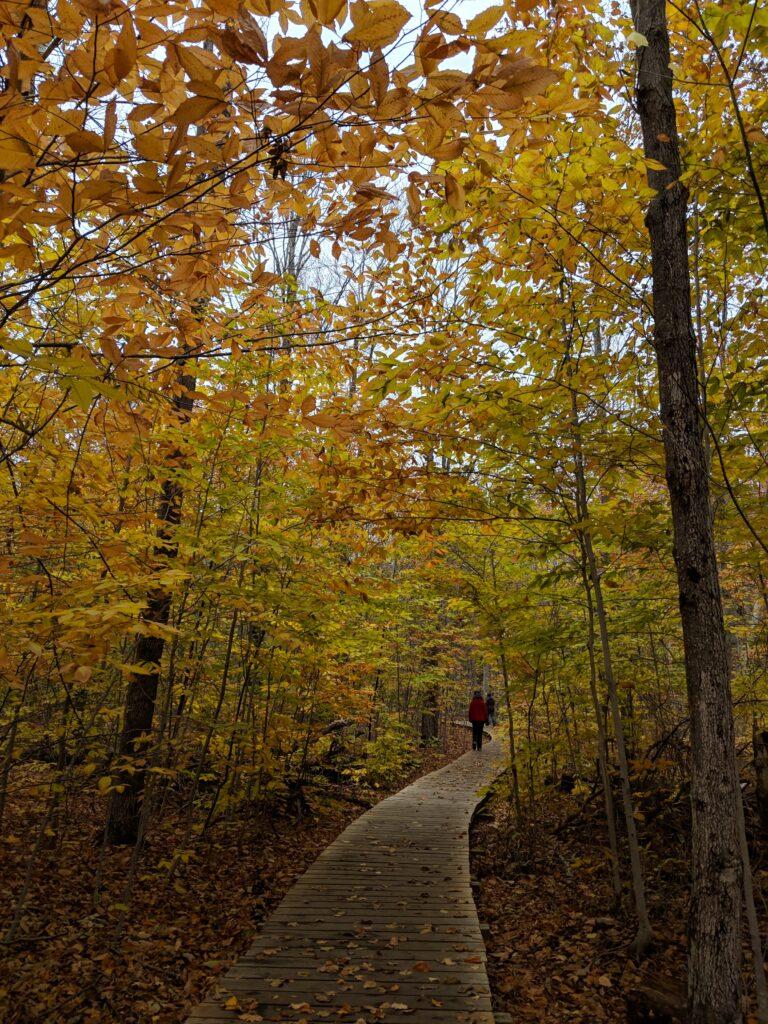 lookout point trail killbear | Best Hikes in Ontario | My Wandering Voyage travel blog